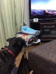 テレビのクマさん