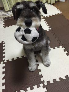 ボールで遊ぼ20160831